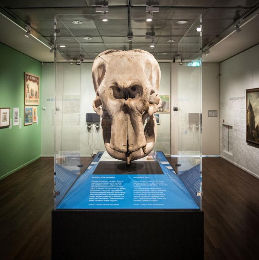 Hanskens schedel in Museum Het Rembrandthuis juni 2021